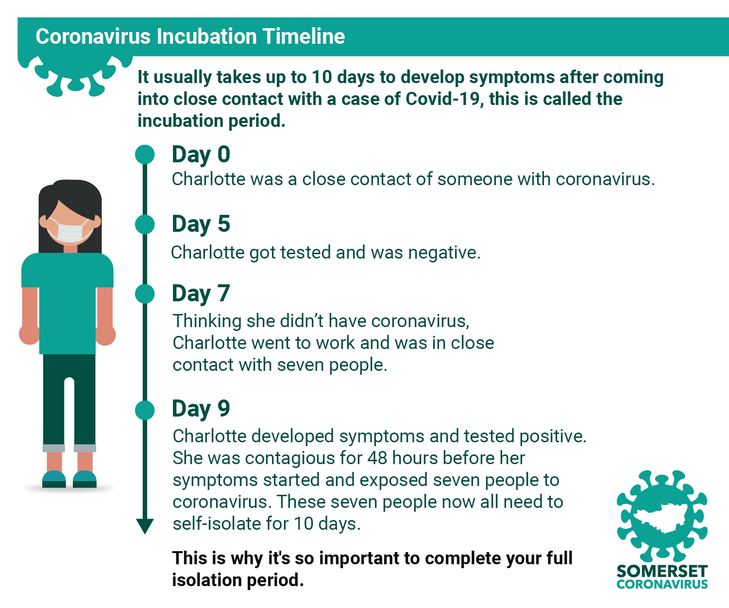 This image describes a typical coronavirus incubation timeline